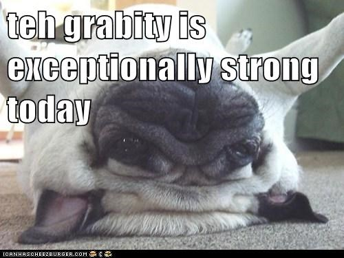best of the week,dogs,Gravity,Hall of Fame,pug,pugs,squish,strong,upside down,wrinkles