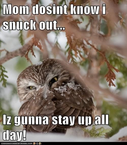 all day devious mischievous mom Owl reversal sneaking out stay up