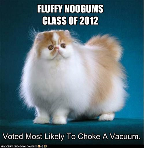 best of the week break Cats clog fluff fur hair Hall of Fame lolcats picture vacuum vacuums yearbook - 6178145792