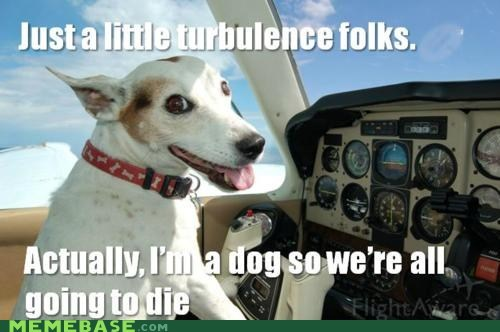 airplane cockpit dogs landing Memes ruff - 6178385920