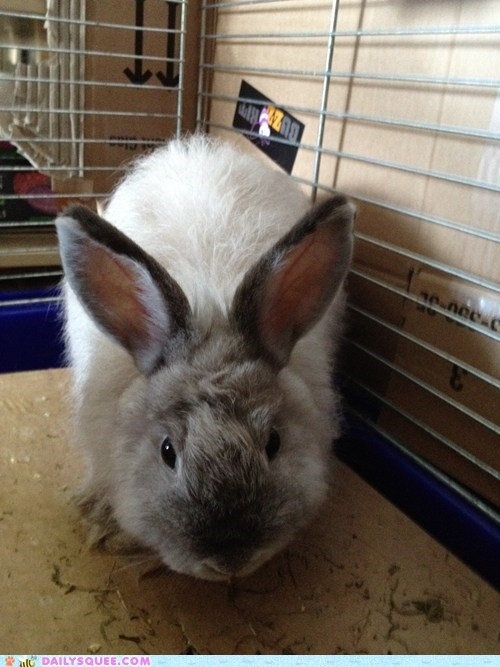 bunny cage friends pets rabbit reader squees - 6178754816