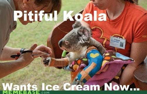 wants cast doctor ice cream koala pitiful injured