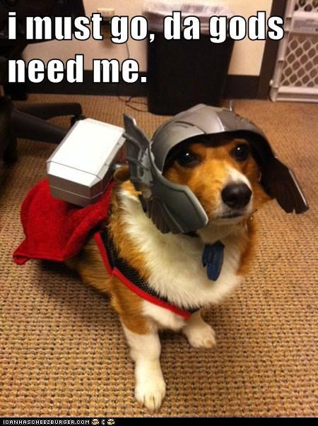 avengers best of the week corgi corgis costume dogs Hall of Fame The Avengers Thor