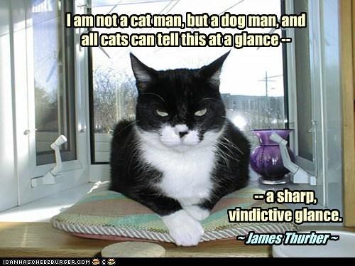 I Am Not A Cat Man