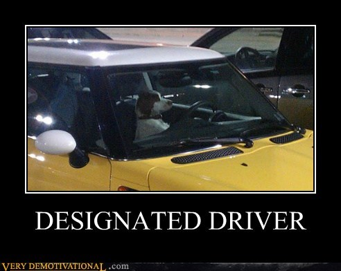 designated driver dogs driving hilarious - 6179753728