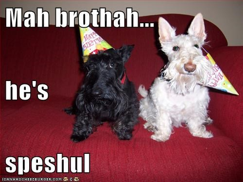 best of the week,dogs,Hall of Fame,hats,scottish terrier,special