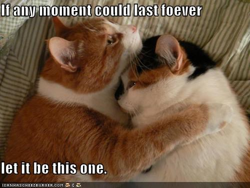 hugging,lolcats,love,orange