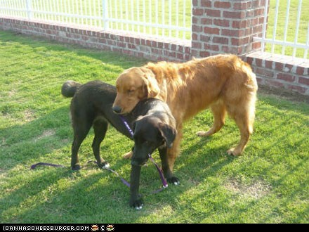 around the interwebsm sweet blind dogs people pets - 6179981568