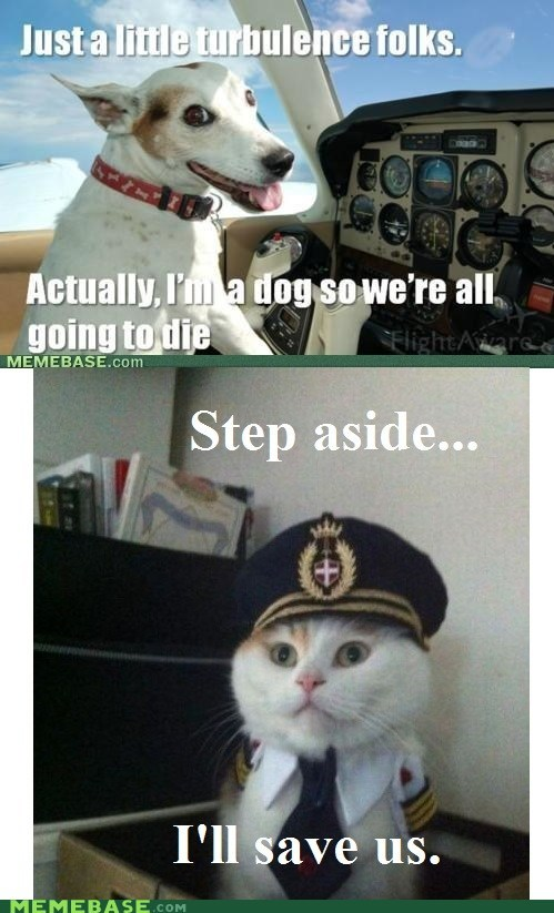 cat dogs fly license Memes - 6180094976