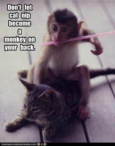 cat catnip drug just say no metaphor monkey monkey on your back