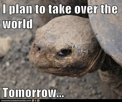 insane insanity tortoise slow tomorrow world domination