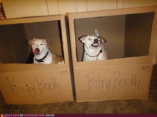 best of week dogs kissing booth wtf - 6180284928