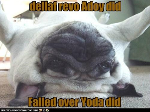 dellaf revo Adoy did Falled over Yoda did