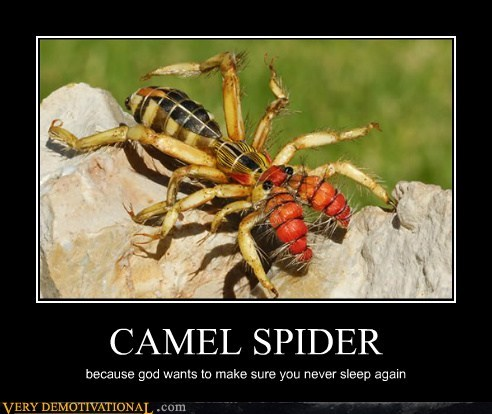 huge,sleep,spider,Terrifying
