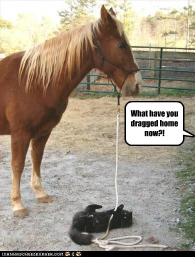 brought,cat,dragged,home,horse,rope,what