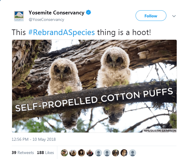 twitter rebranding species animals - 6181381