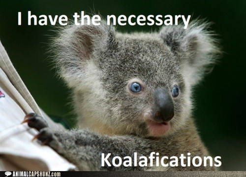 australia,jobs,koala,puns,qualifications