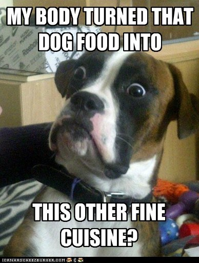 confused canine dogs dog food Memes - 6182279936