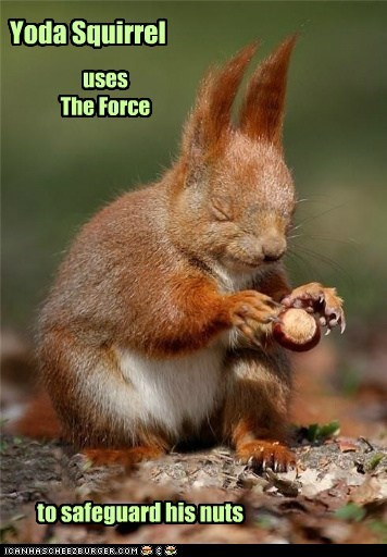 Yoda Squirrel uses The Force to safeguard his nuts