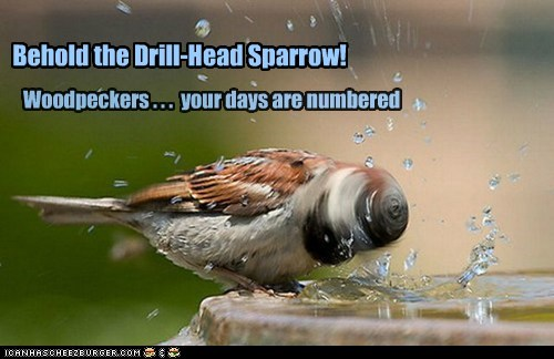 Behold the Drill-Head Sparrow! Woodpeckers . . . your days are numbered