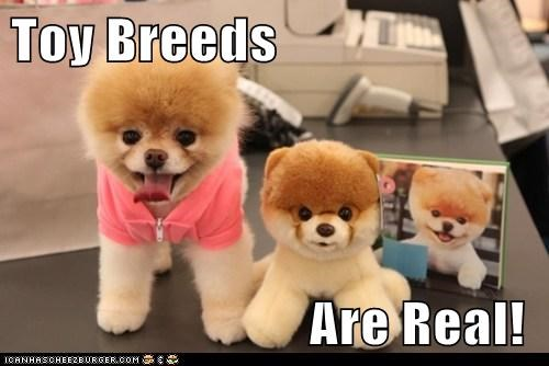 Cheezburger Image 6183715584
