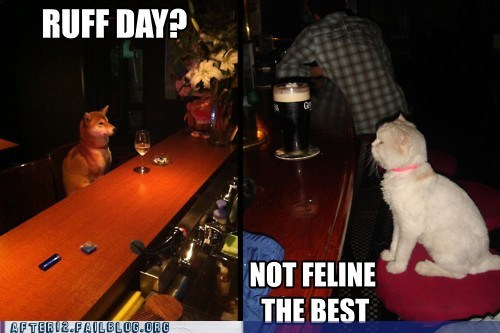 bar cat bar dog Hall of Fame not feline the best ruff day - 6183745792
