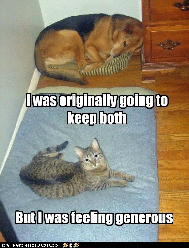 bed,beds,best of the week,cat,Cats,cats are jerks,dogs,generous,Hall of Fame,selfish,sleep,unfair,what breed