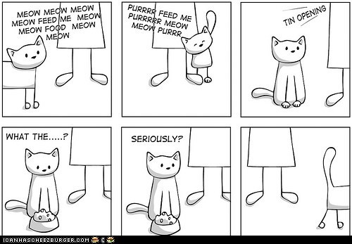 annoying behavior cans Cats comic comics feed me food hungry meow