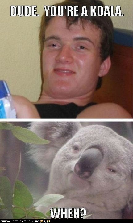 drugs,high,koala bears,koalas,marijuana,multipanel,pot,stoned
