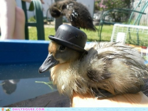 birds duck duckling ducklings ducks fancy fashionable Hall of Fame squee top hat top hats - 6184757504