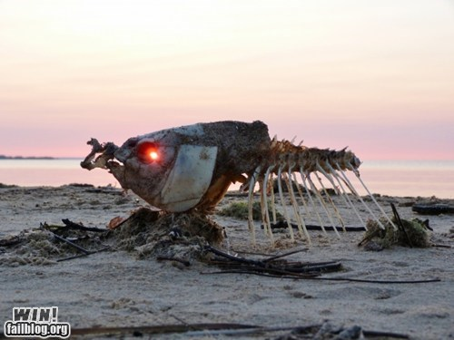 beach fish photography skeleton sunset wincation - 6184982016