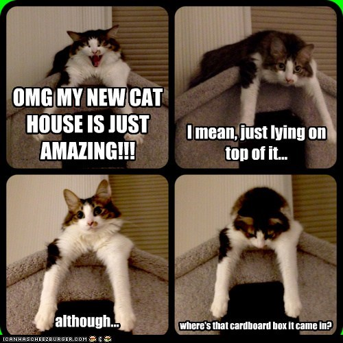 annoying,box,boxes,cardboard,cardboard box,cat tree,Cats,Hall of Fame,house,lolcats,multipanel,new,present,sit