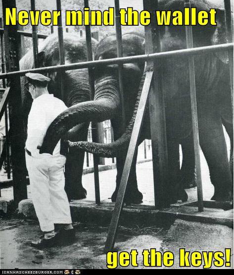 elephants escape keys pickpocket pocket stealing wallet zookeeper - 6185564672