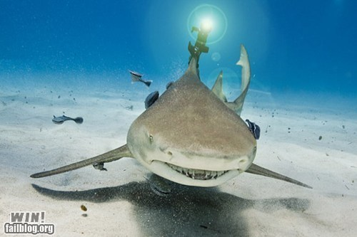 lasers science shark what - 6185727232