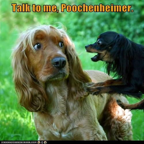 Cheezburger Image 6186650624