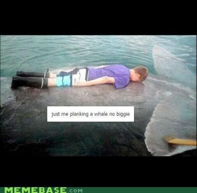 faecbook Memes no biggie Planking whale - 6186682624