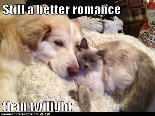 cat,dogs,romance,still a better love story,what breed