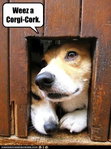 Weez a Corgi-Cork.
