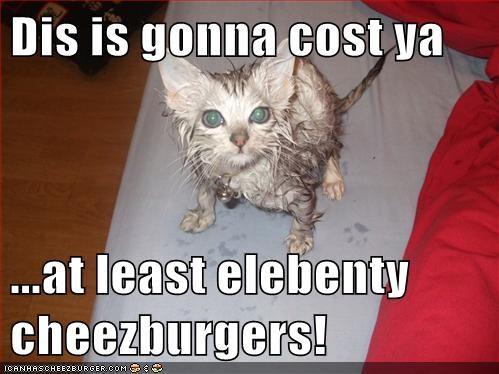 Cheezburger Image 6187595520