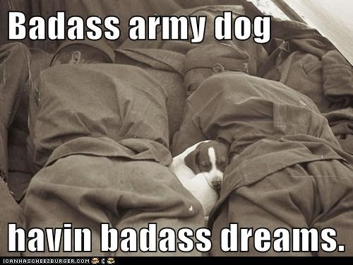 Badass army dog havin badass dreams.