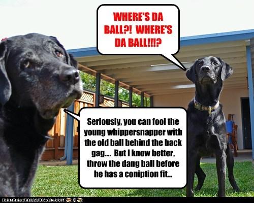ball dogs lab trick - 6187645952