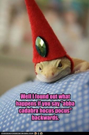 backwards lizard mistake spell transform - 6187960832