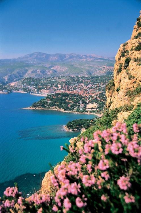 flowers,france,ocean,shore