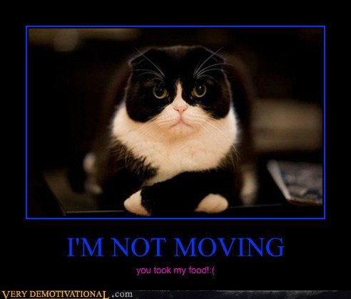 cat food hilarious moving wtf - 6188608768