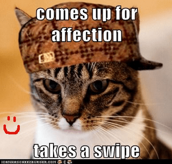 affection betrayal Cats Memes pain Scumbag Cat scumbags swipe