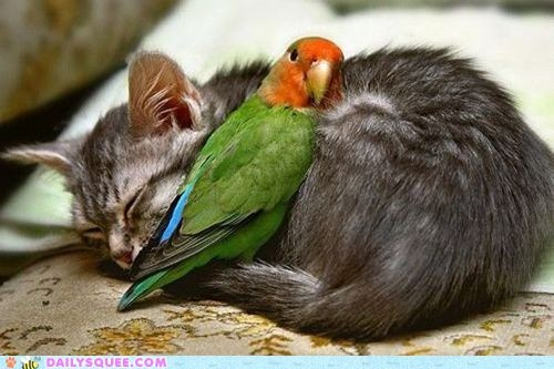 bird,birds,Cats,Interspecies Love,kitten,love,sleep,sleeping,snuggle,snuggles,snuggling