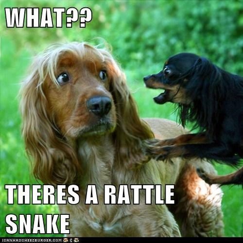 Cheezburger Image 6188664064