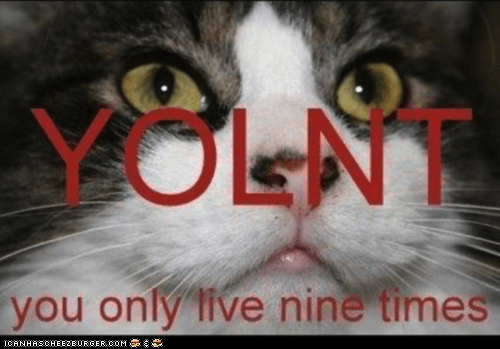 Cats nine lives yolnt yolo you only live once - 6188674048