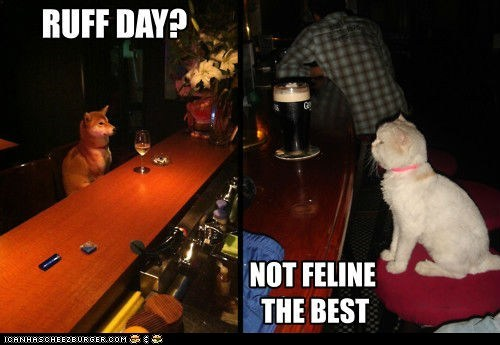 alcohol,bars,beer,Cats,dogs,drinking,puns,rough day