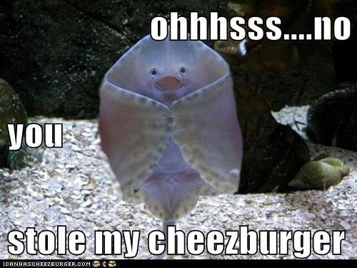 Cheezburger Image 6189003776